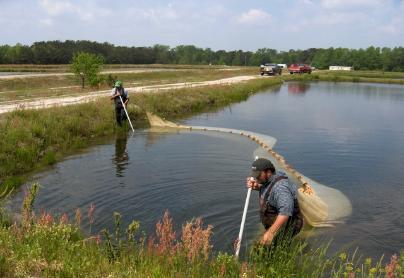 Live Fish For Pond Stocking Photo Gallery Carolina Fish Hatchery Inc